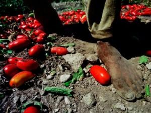 immigrato-pomodori-piedi-e1317144520515